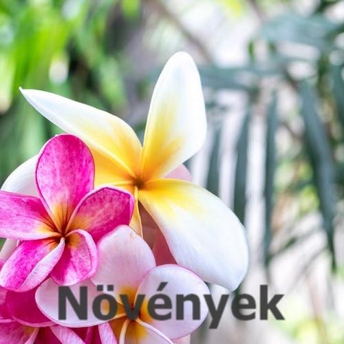különleges növények, colocasia, taro, pálma, szukkulens növények, eladó növényi szaporítóanyag