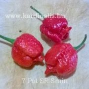 7 Pot SR Strain II, 10 mag
