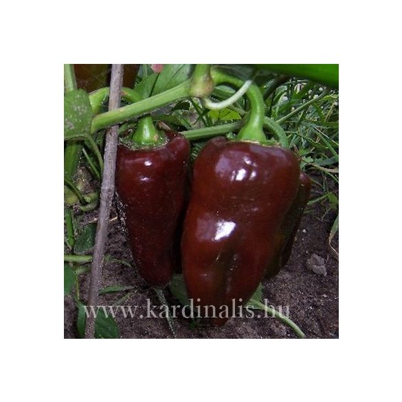 Barna édes paprika 10 mag.