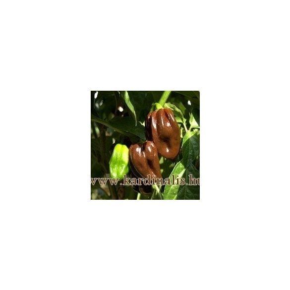 Csokoládé Habanero 10 mag