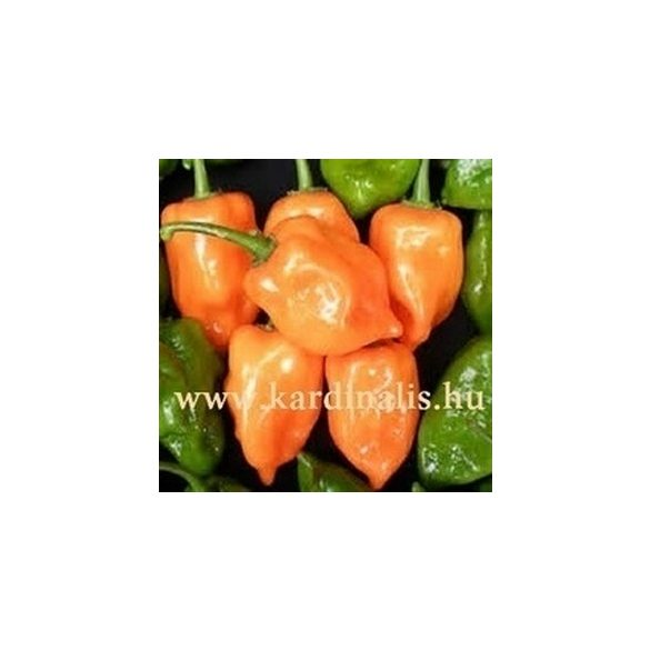 Orange Craig's Double-Hot Orange Habanero 10 mag