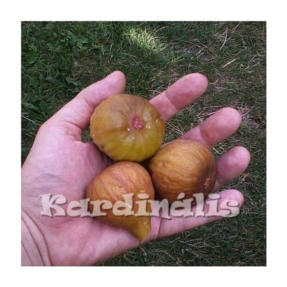 Ficus carica,  füge, füge termés, füge növény eladó