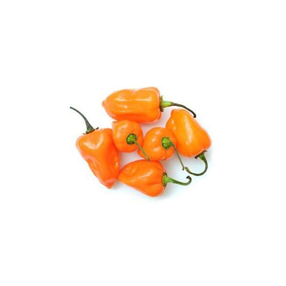 Orange Habanero 10 mag