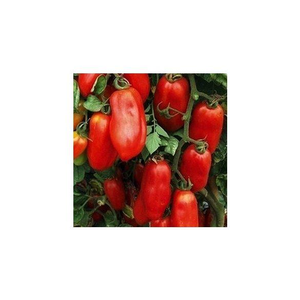 San Marzano mini paradicsom 10 mag