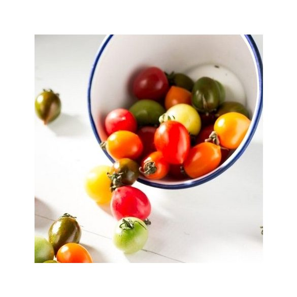 Trefle du Togo paradicsom 10 mag