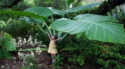 egzotikus növények kaphatóak