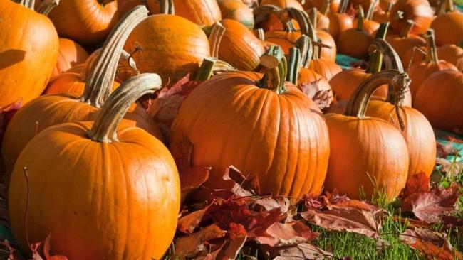 Halloween_tök_mag_eladó_cucurbita_maxima